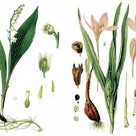 floramedica